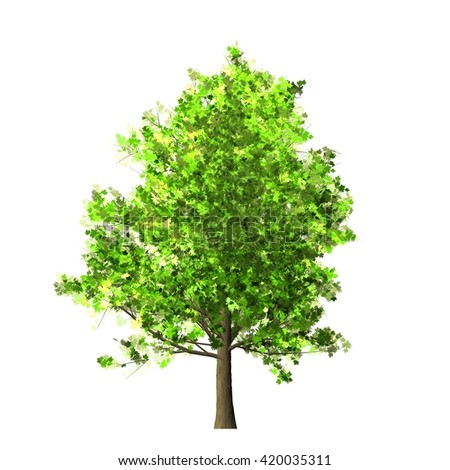 Maple Tree Isolated on white background, 3D Illustration.