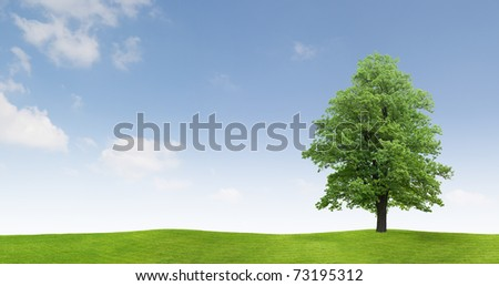 Maple Tree on a meadow - stock photo
