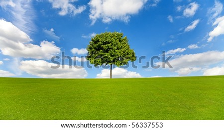 Maple tree on a meadow against a blue sky - stock photo