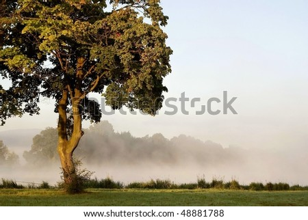 Maple tree on the shore of the lake with morning mist floating over the water. - stock photo