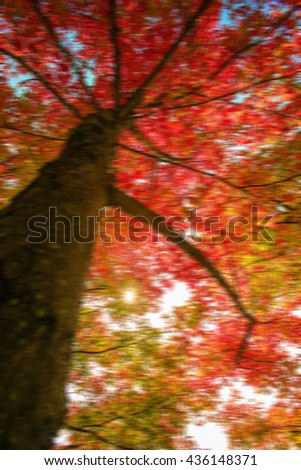 maple tree out of blur for background