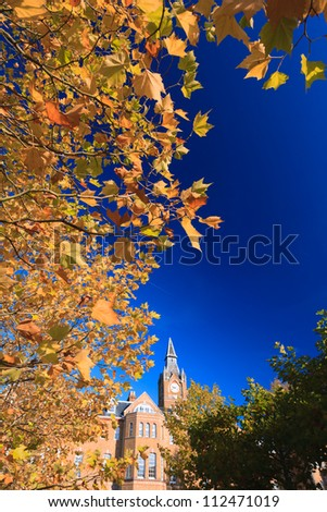Maple tree with blue sky - stock photo