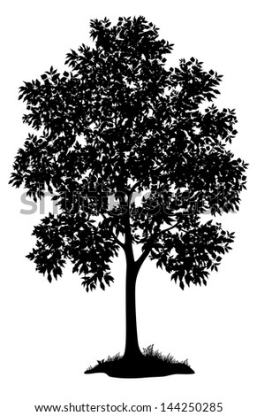 Maple Tree Leaves Grass Black Silhouette Stock Vector