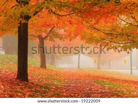 maple trees in autumn, Deer Lake Vancouver, Canada - stock photo