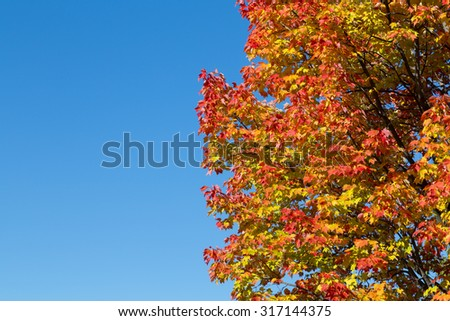 Maple Trees in Canada in the fall with copy space on the left - stock photo