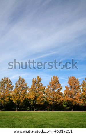 Maple Trees Lined Up Along A Walkway In Early Autumn, Ault Park, Cincinnati, Ohio - stock photo