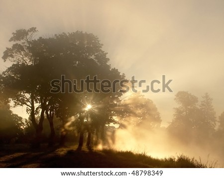 Maple trees on the edge of the misty lake at sunrise. Photo taken in October. - stock photo