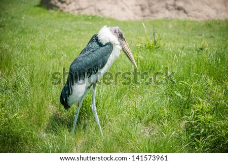 Marabou stork walking alone in the tall grass - stock photo