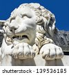Marble sculpture of waking up lion in Vorontsov Palace in Alupka, Crimea, Russia. - stock photo