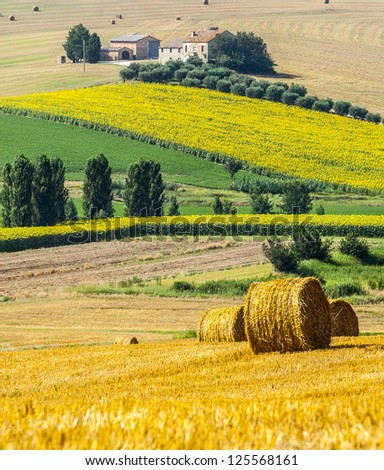 Marches (Italy) - Landscape at summer near Jesi, typical farm - stock photo