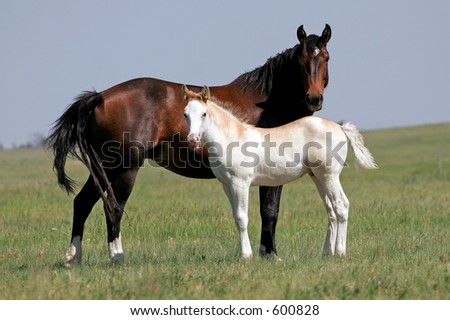 Mare and Colt on a ranch - stock photo