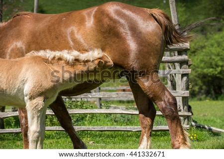 Mare and cute foal eating in summer pasture - stock photo