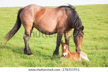 Mare and foal grazing together in a pasture - stock photo