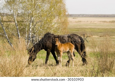 mare and foal in field - stock photo
