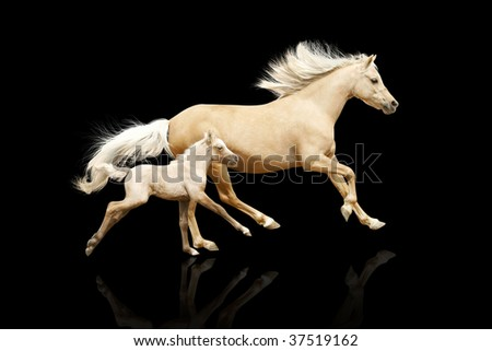 mare and foal isolated