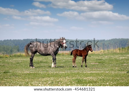 mare and foal on pasture