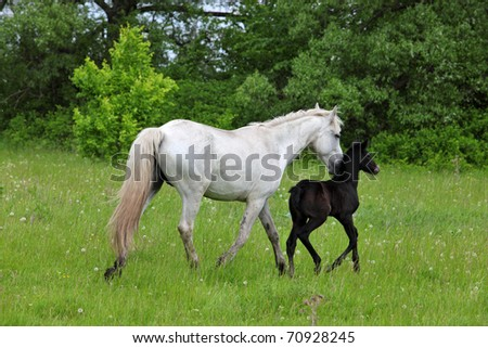 Mare and foal walks in wood glade - stock photo
