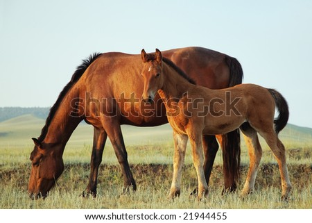 Mare and her foal in a field - stock photo