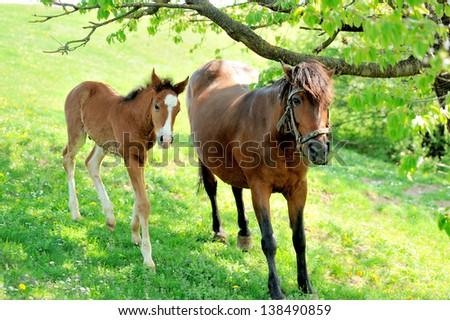 Mare and her foal in summer day - stock photo