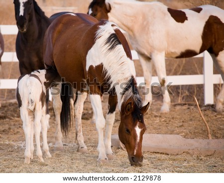 Mare and pony - stock photo
