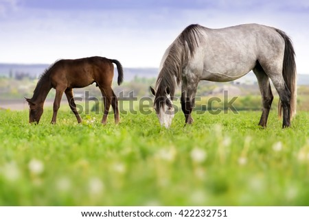 Mare with colt grazing on pasture - stock photo