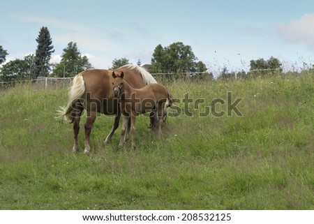 mare with colt on horse lot