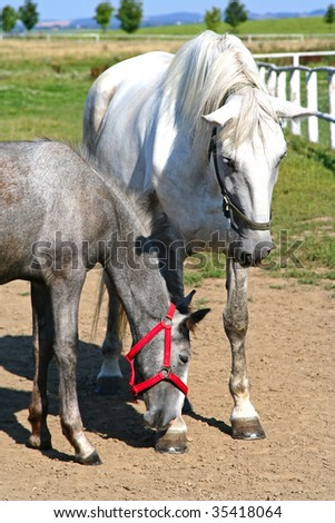 mare with foal - stock photo