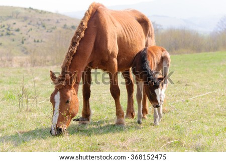Mare with foal on green meadow in spring
