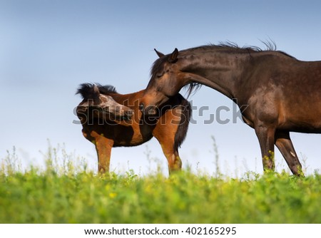 Mare with foal outdoor - stock photo