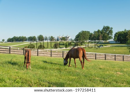 Mare with her colt in pastures of horse farms. Country summer landscape. - stock photo