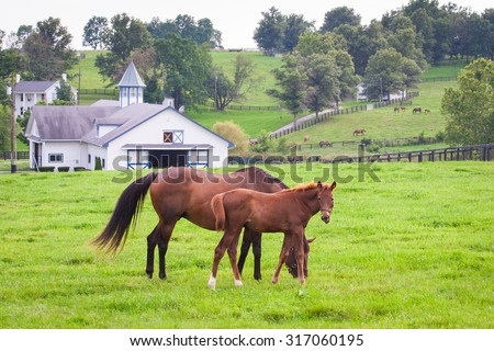Mare with her colt on pastures of horse farms. Country summer landscape. - stock photo