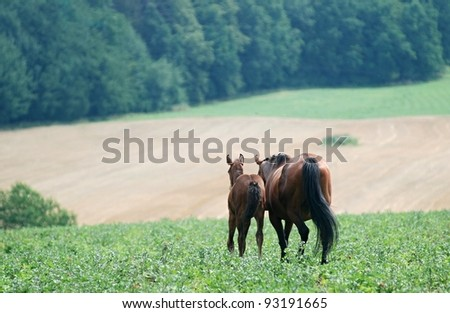 Mare with her foal in pasture