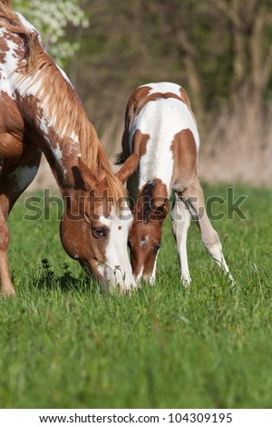 Mare with nice foal - stock photo