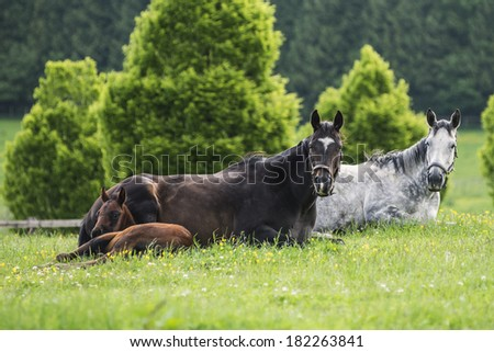 Mares and foal have a relax moment in the pasture