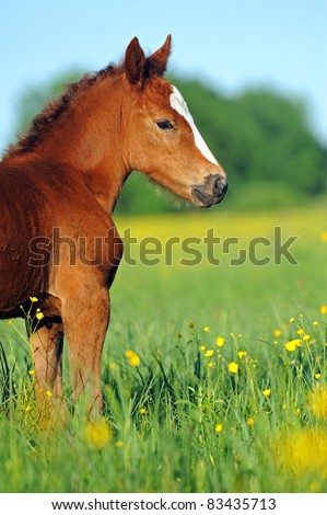 Mares and foals in the mountains - stock photo
