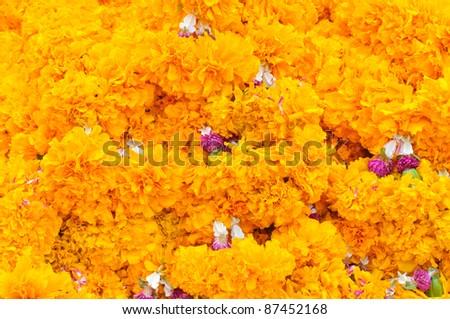Marigold flower - stock photo