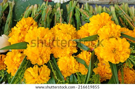 Marigold flower for Buddhist religious ceremony - stock photo
