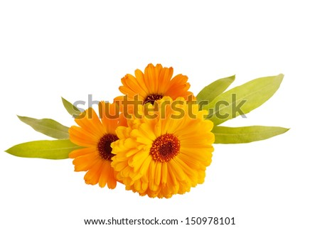 Marigold flower isolated on a white background - stock photo
