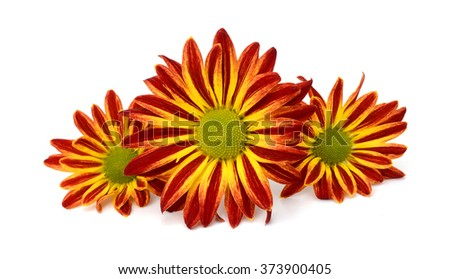 Marigold flower isolated on a white background.