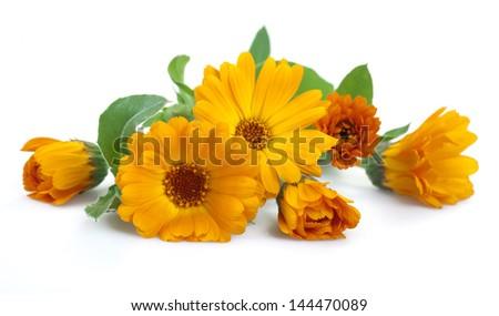 Marigold flowers, isolated on white. - stock photo
