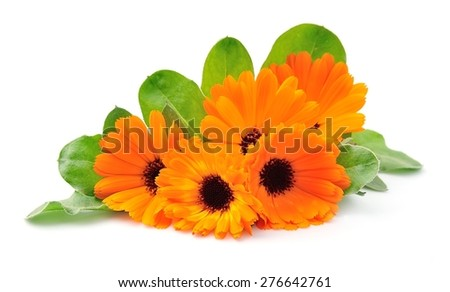 Marigold flowers on a white background. Orange flowers. - stock photo