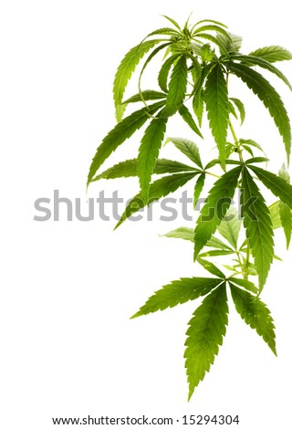 Marijuana Border - stock photo