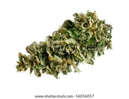 Marijuana bud, freshly manicured. - stock photo