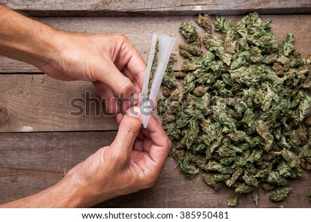 Marijuana buds with hande making big joint