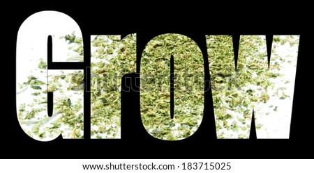 Marijuana, Grow  - stock photo