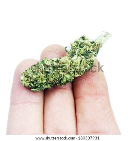 Marijuana in Hand - stock photo