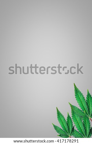 marijuana leaves on a gray background - stock photo