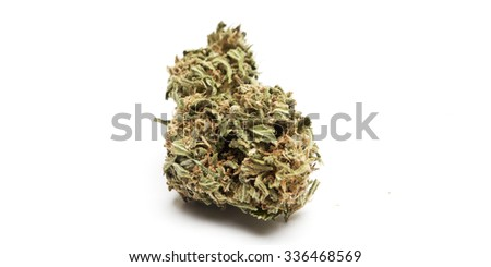 Marijuana or Cannabis Plant Bud Containing the Drug THC