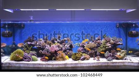 marine aquarium, coral aquarium - stock photo