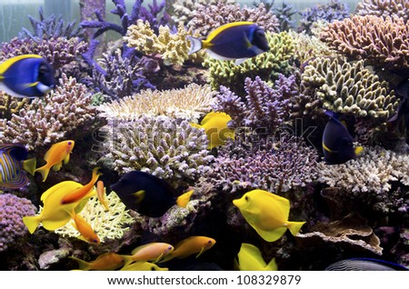 marine aquarium, coral aquarium - stock photo